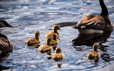 Wild Goose Festival 2021: Safe Beneath the Goose's Wings
